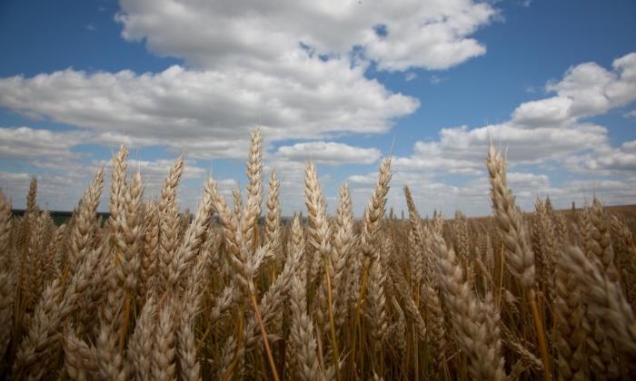В Республике Татарстан наградили передовиков сельского хозяйства