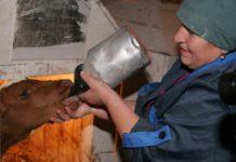 В Татарстане обсудили поддержки малых форм хозяйствования