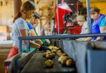 В Томской области появится Центр компетенций в сфере развития сельхозкооперации