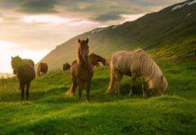 Заболевания конечностей у лошадей