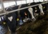 Группа «Ташир» продала «ЭкоНиве» молочный проект в Калужской области