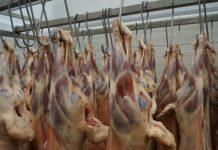 Компания из Карачаево-Черкесии поставит 500 тонн баранины в Иран