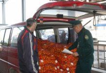 Поставки мандаринов из Абхазии выросли вчетверо по сравнению с 2017 годом