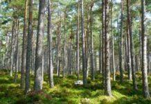 Российские леса защитят от «чёрных лесорубов»