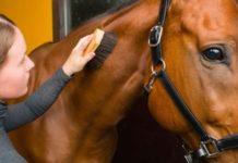 Уход за кожей лошади