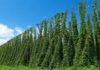 В Чувашии производители хмеля получат новый вид господдержки