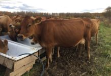 Высокая маржинальность органической молочной продукции – планка, до которой нужно дотянуться