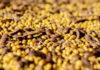 «Черкизово» планирует заняться переработкой сои