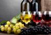 Губернатор Краснодарского края Вениамин Кондратьев сообщил, что регион остается лидером в отрасли виноградства