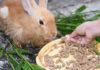 Концентрированные корма для кроликов