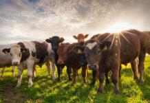 Конституция и хозяйственная ценность животных