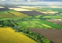 Кубанское правительство предлагает разграничить сельхозугодия