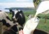 Методы повышения молочной продуктивности