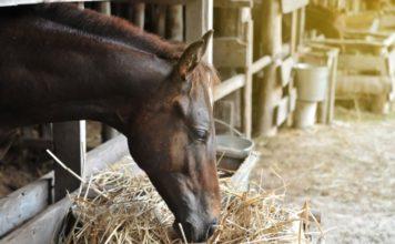 Особенности в кормлении лошадей