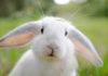 Почему именно кролик?