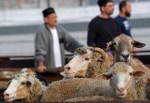 С 2019 года в Бельгии запрещены религиозные практики убоя животных