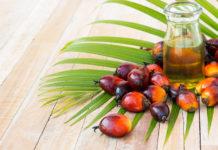 Темпы производства пальмового масла в мире замедлятся