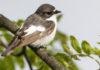 Ученые рассказали о птичьих войнах из-за глобального потепления