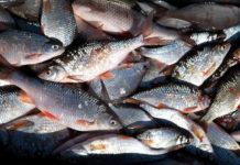 В 2018 году российские рыбаки добыли более 5 млн тонн водных биоресурсов