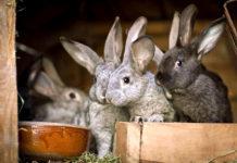В Ярославской области развивают кролиководство