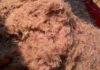 В Приморье не допущен ввоз более 19 тонн морского криля из Японии
