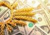 Россия стала больше экспортировать пшеницы