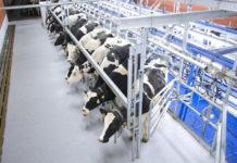 Агрофирма «Пахма» построит молочную ферму в Ярославской области