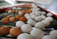 Агрохолдинг «Комос Групп» займется развитием бизнеса