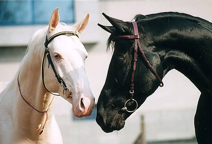 Биологические особенности лошади