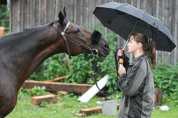Как высушить лошадь за 2 минуты?