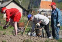 Камчатские депутаты предлагают поддержать дачников госпрограммой