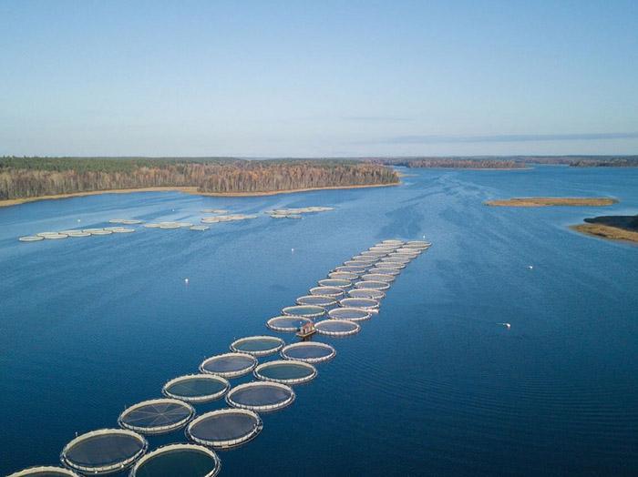 Ленинградская область сотрудничает с Норвегией в сфере развития аквакультуры
