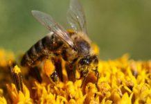 Липецкие пчеловоды подвели итоги работы в 2018 году