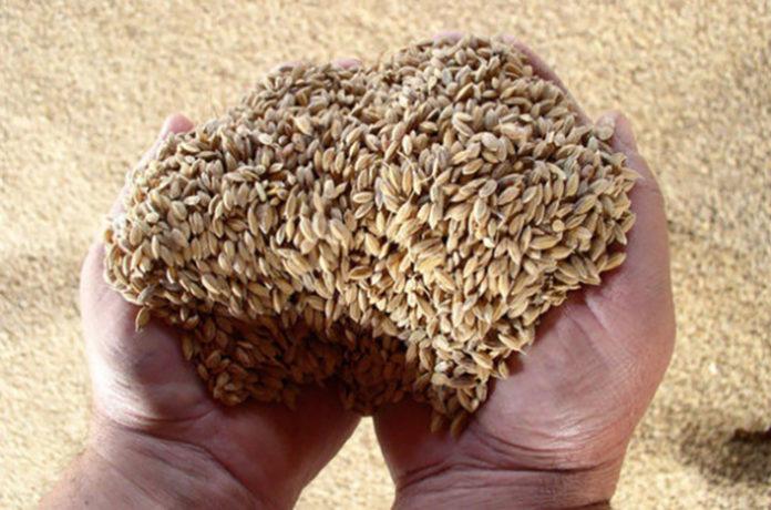 Минсельхоз предложил выдавать льготные кредиты на закупку зерна