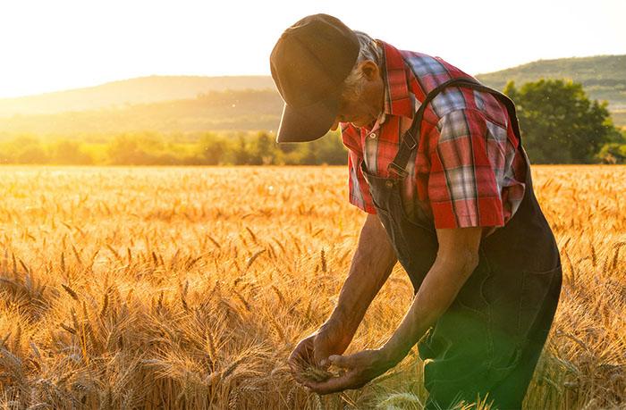 Неопределенный юридический статус фермера в России порождает проблемы