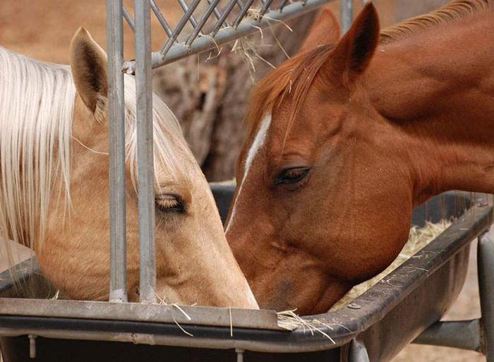 Особенности техники разведения лошадей