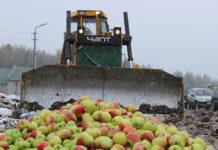 Под Смоленском уничтожена крупная партия фруктов неизвестного происхождения