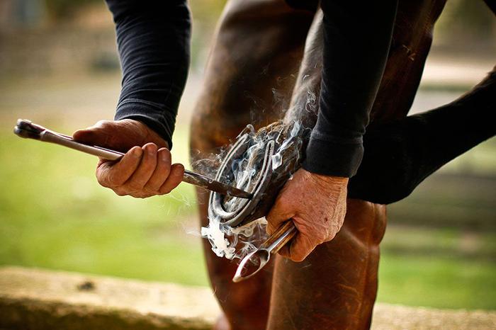 Подковывание лошадей