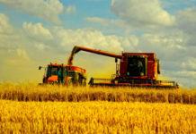 Развитие Украины: быть или не быть аграрной страной?