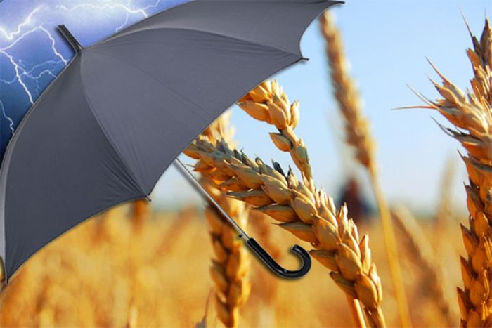 Photo of Развитие сельхозстрахования невозможно без тесной связи с аграриями