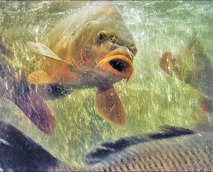 Роль кислорода в жизнедеятельности рыб