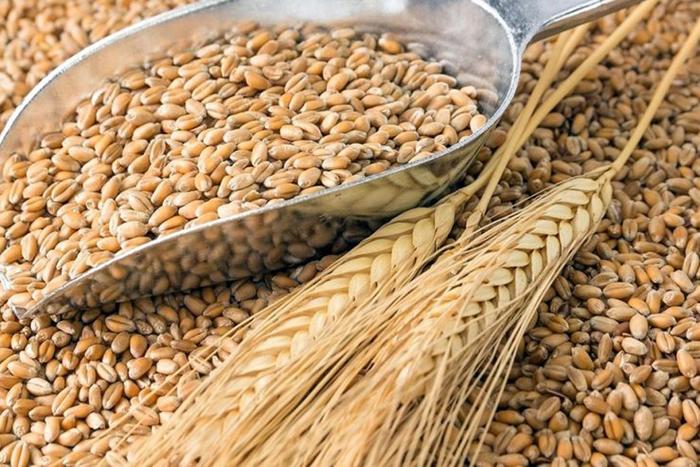 Россия, Казахстан и Иран подписали меморандум по вопросу сотрудничества в торговле пшеницей