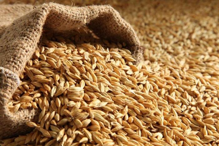 Сбор зерновых может вырасти до 137,5 млн тонн к 2024 году