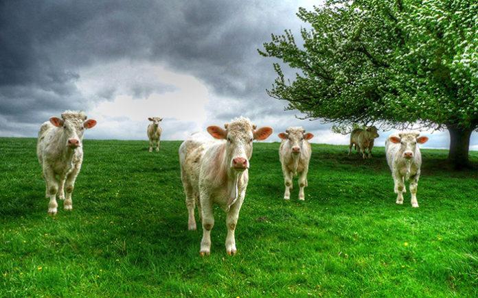 Северное Нечерноземье может создать Молочный пояс России и нарастить экспорт продукции