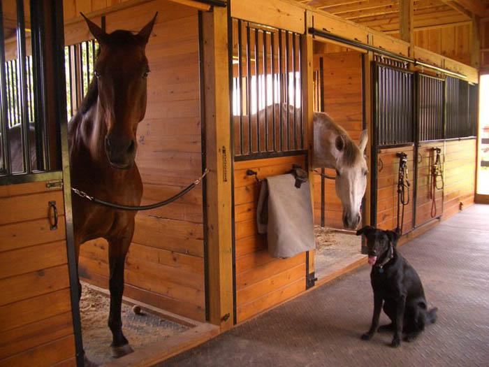 Содержании лошадей