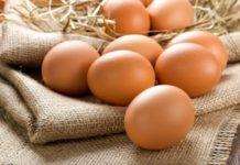 Тульская птицефабрика расширяет производство