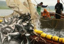 Украина подписала протокол с Россией о вылове рыбы в Азовском море