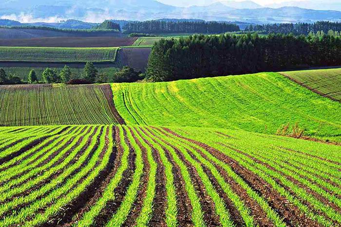 В Казахстане полноценный рыночный оборот сельхозземель практически отсутствует