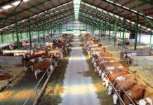 В Тульской области построят крупный животноводческий комплекс