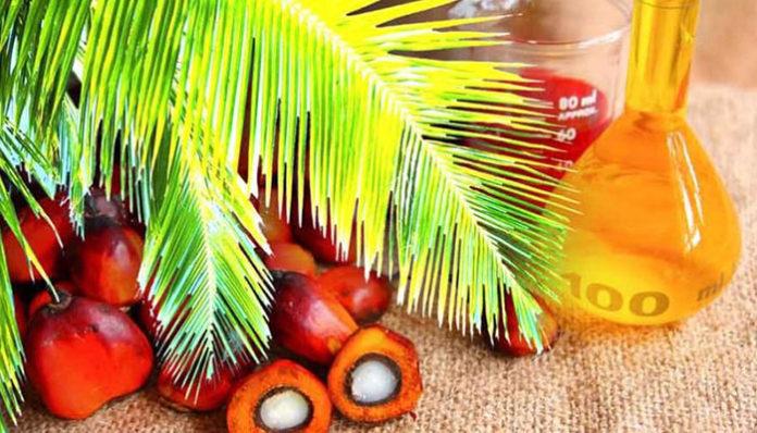 Ввоз пальмового масла в Россию впервые превысил миллион тонн